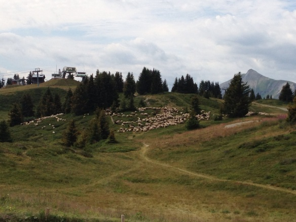 Ski lifts and sheep in the high pastures above Les Houches, France