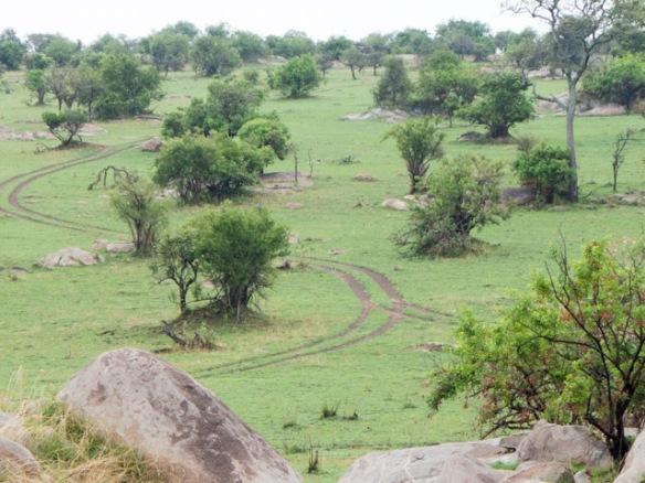 More Serengeti landscape.