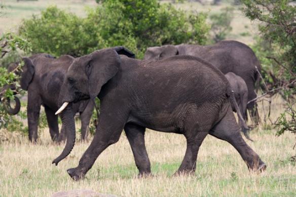 A large mama Elephant.....