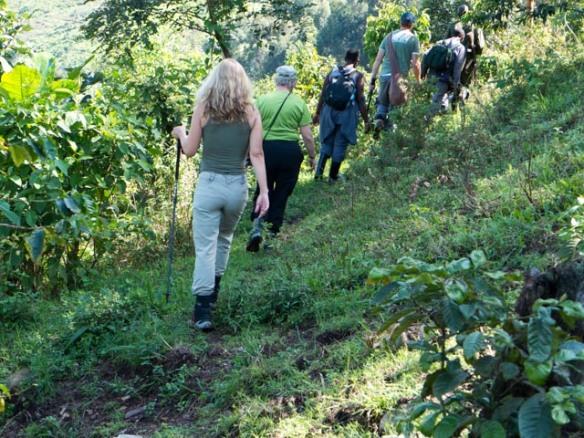 Hiking into Bwindi Impenetrable National Park.