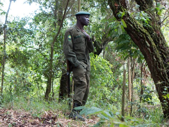 One of the armed guards that accompanied our gorilla trek.  These guides have the responsibility of protecting the gorilla families from poachers and are funded, for the most part, by permits issued to trekkers.