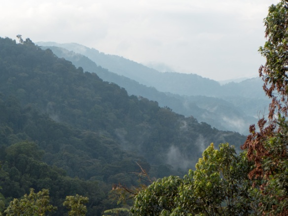 Uganda was absolutely beautiful, with lush mountains in the southern part of the country.