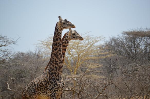 Africa (2013.09.30) - 0071